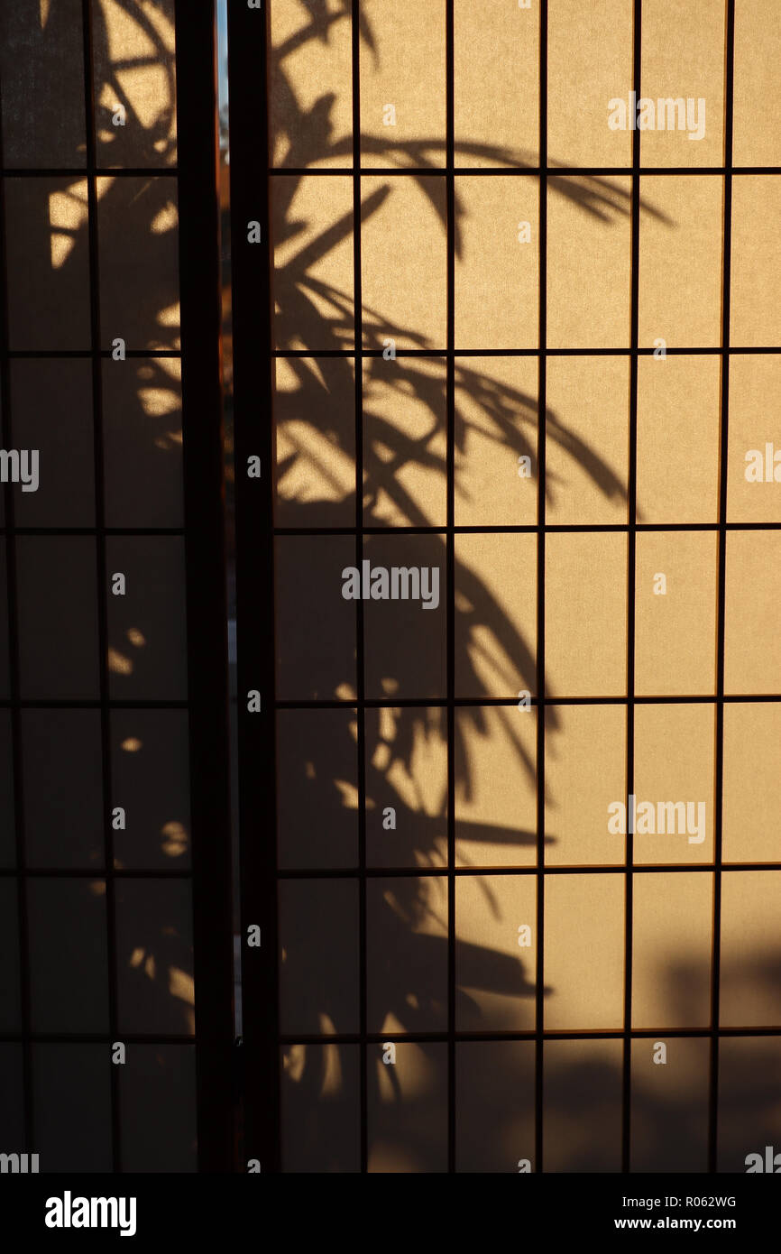 Lady palm (Rhapis) casting a shadow on a Japanese rice paper or shoji screen used for privacy or room divider that lets diffuse light into the room. - Stock Image