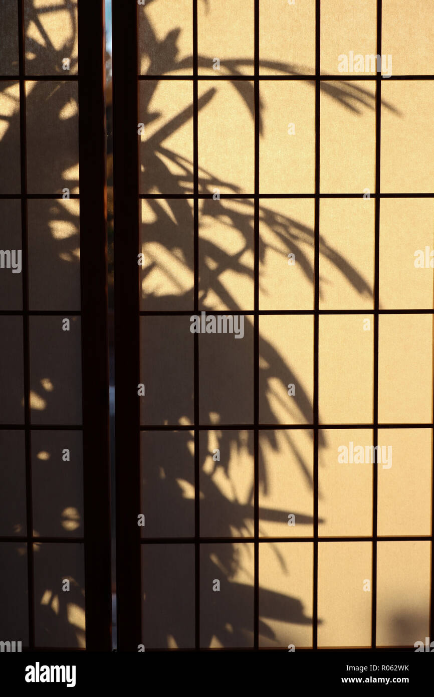 Lady palm (Rhapis) silhouetted on a Japanese rice paper or shoji screen used for privacy or room divider that lets diffuse light into the room. Stock Photo