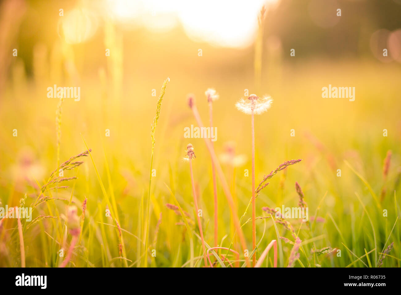 Vintage Romance Nature Artistic High Resolution Stock Photography And Images Alamy