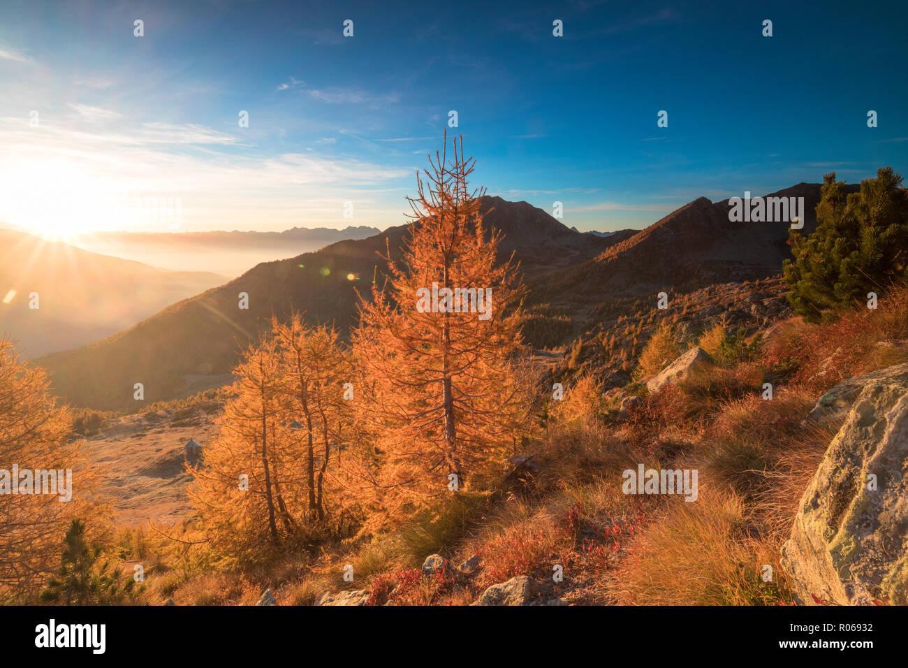 Sunburst on colorful larches during fall season, Alpe Arcoglio Valmalenco, Valtellina, Lombardy, Italy, Europe Stock Photo