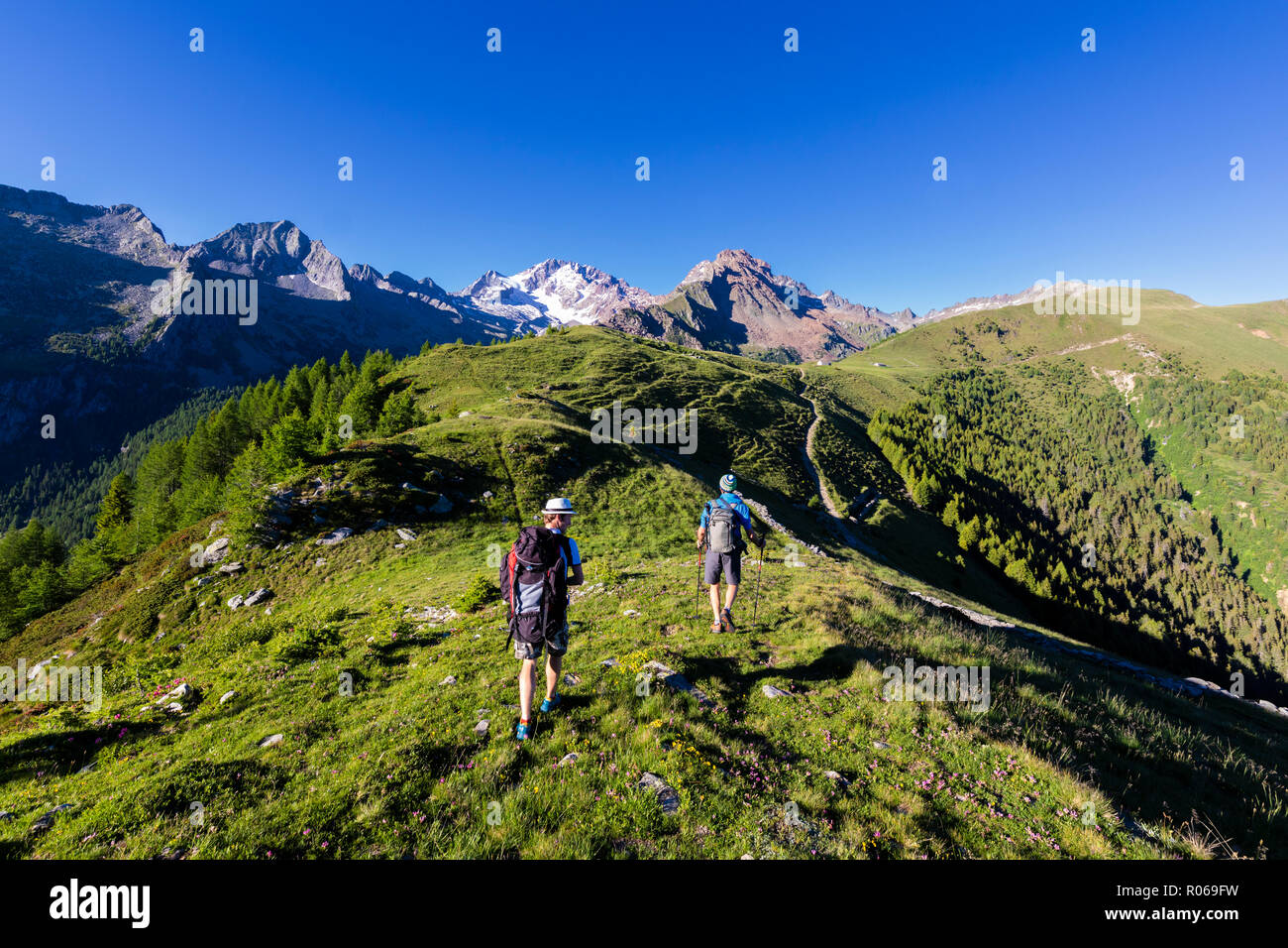 Hikers walk towards Monte Disgrazia from Scermendone Alp, Sondrio province, Valtellina, Rhaetian Alps, Lombardy, Italy, Europe Stock Photo