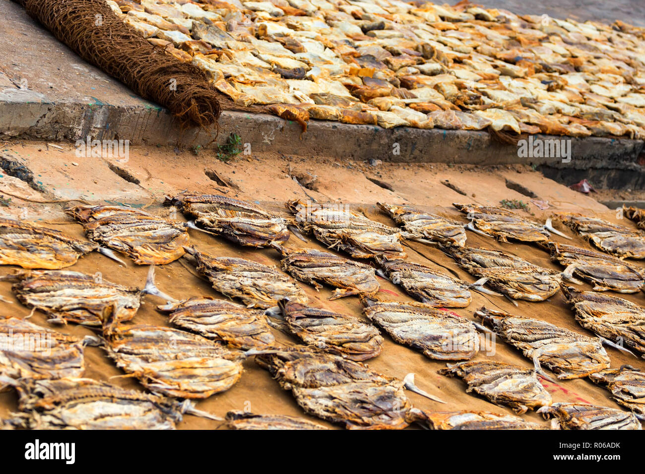 Fish caught and laid on ground at fishing pier - Stock Image