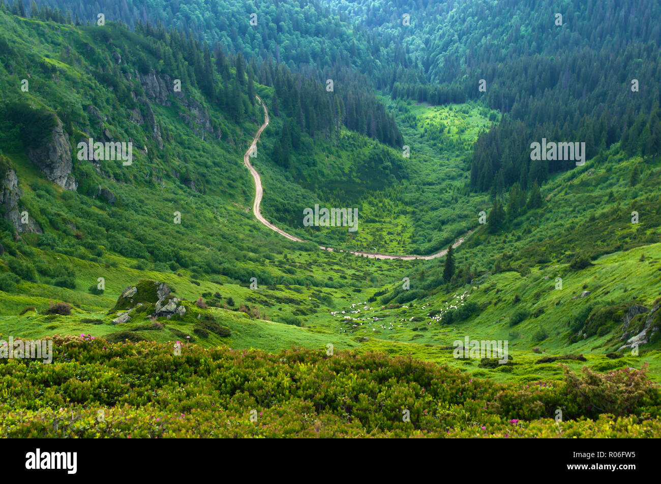 Winding road in the valley among majestic green rugged hills covered in lush grass, bushes, forest. Herd of sheep grazing in the distance. Summer day  - Stock Image