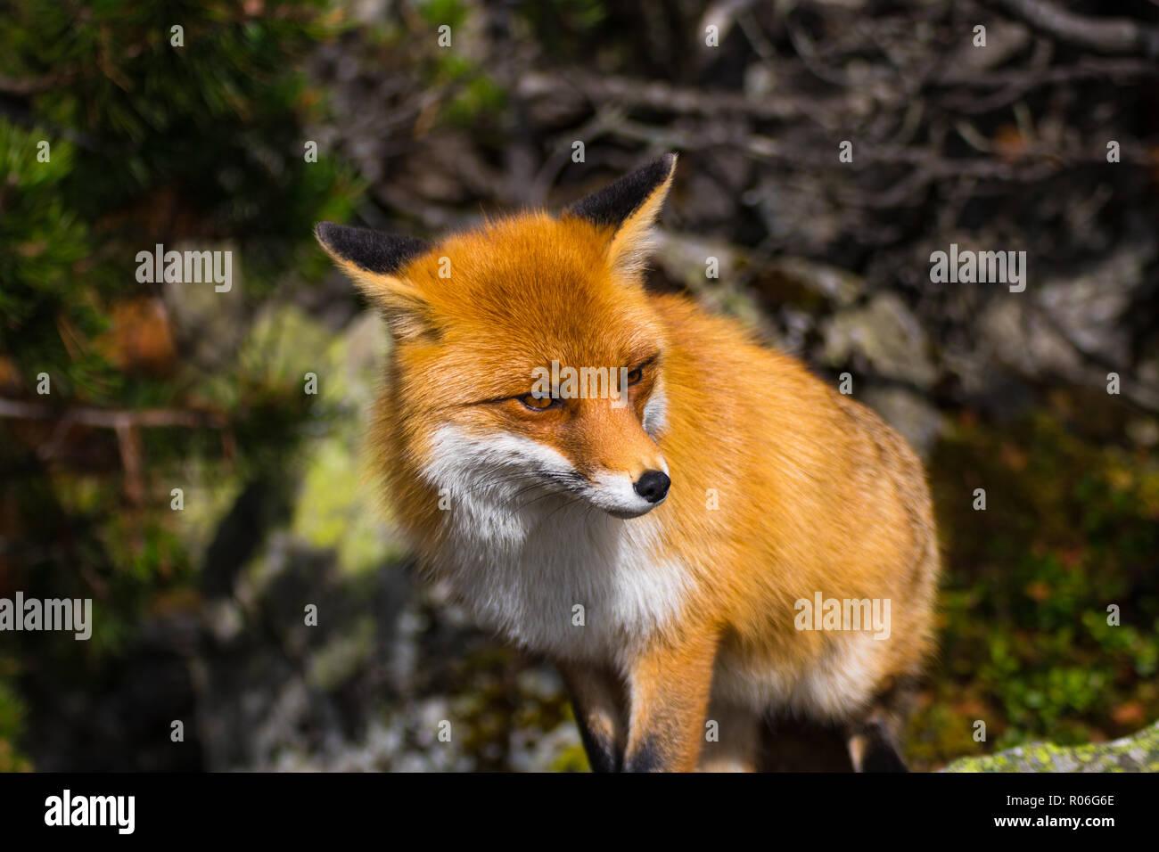 Ginger Fox Nude Photos 65