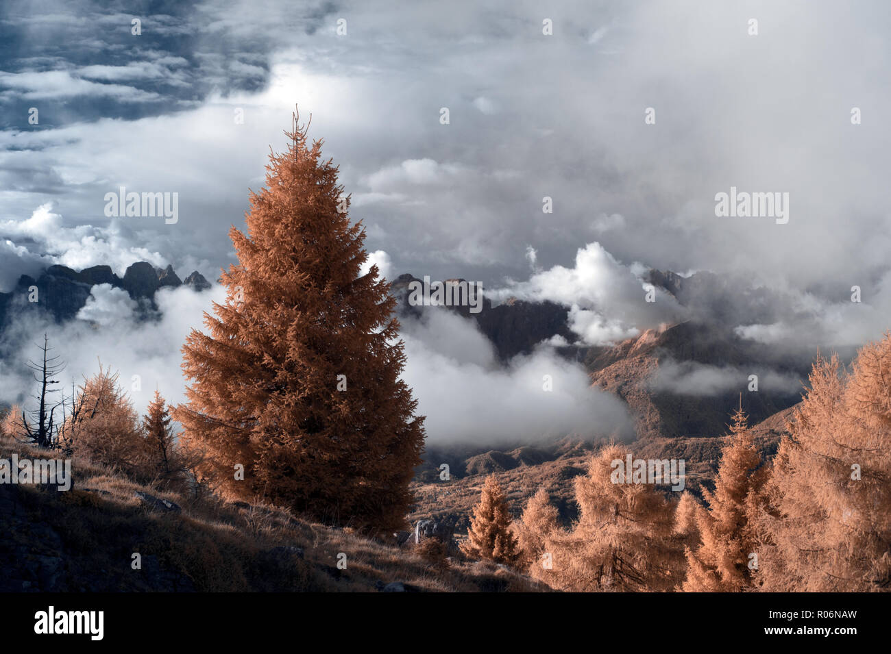 Nevegal in infrared - Alpe del Nevegal, belluno, Dolomiti - Stock Image