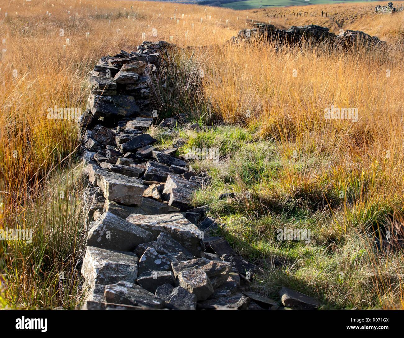 Broken stone wall in the West Pennine Moors traversing bleak moorland. - Stock Image