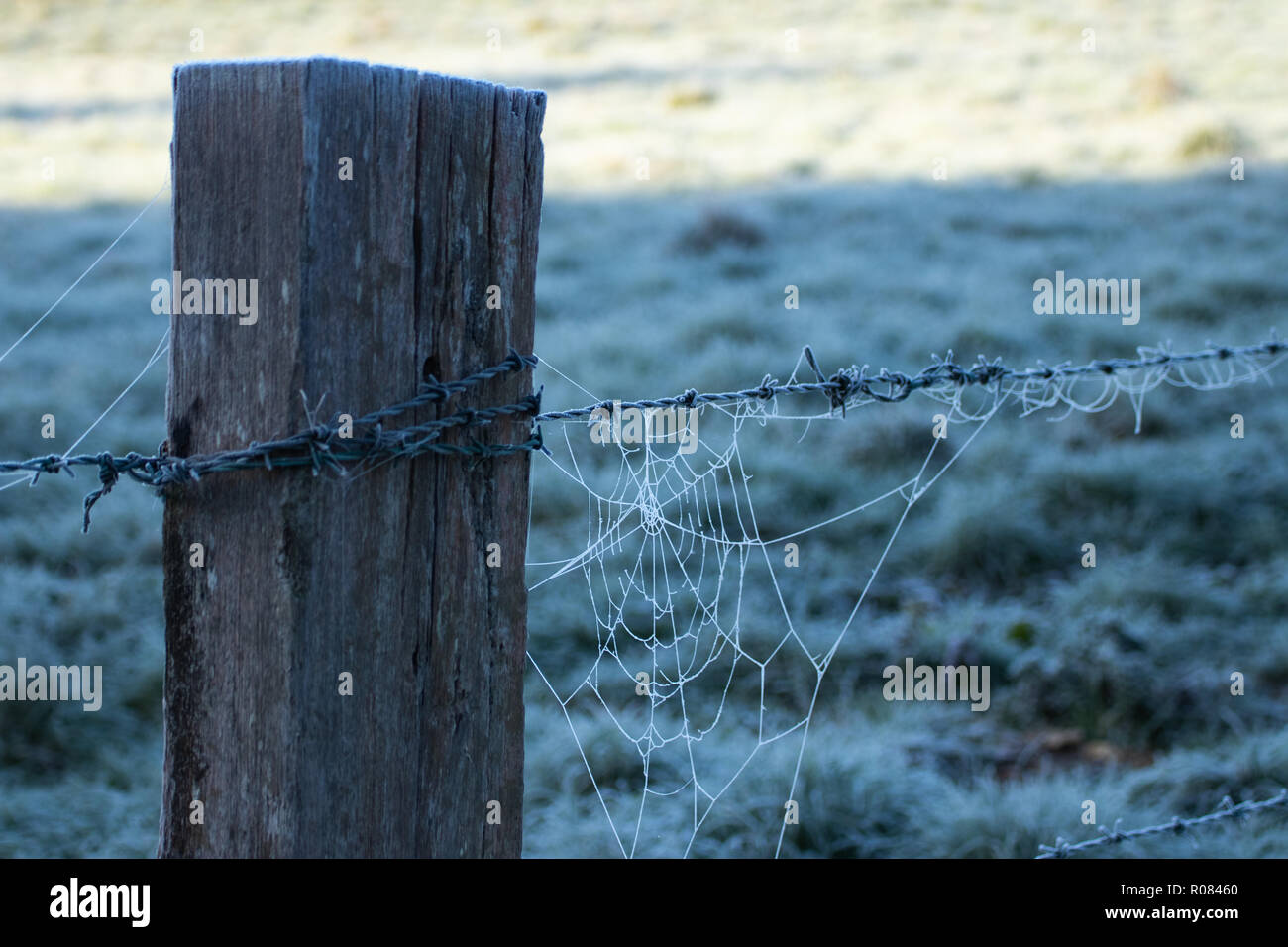 Barbed wire Fence post with frosty cobweb - Stock Image