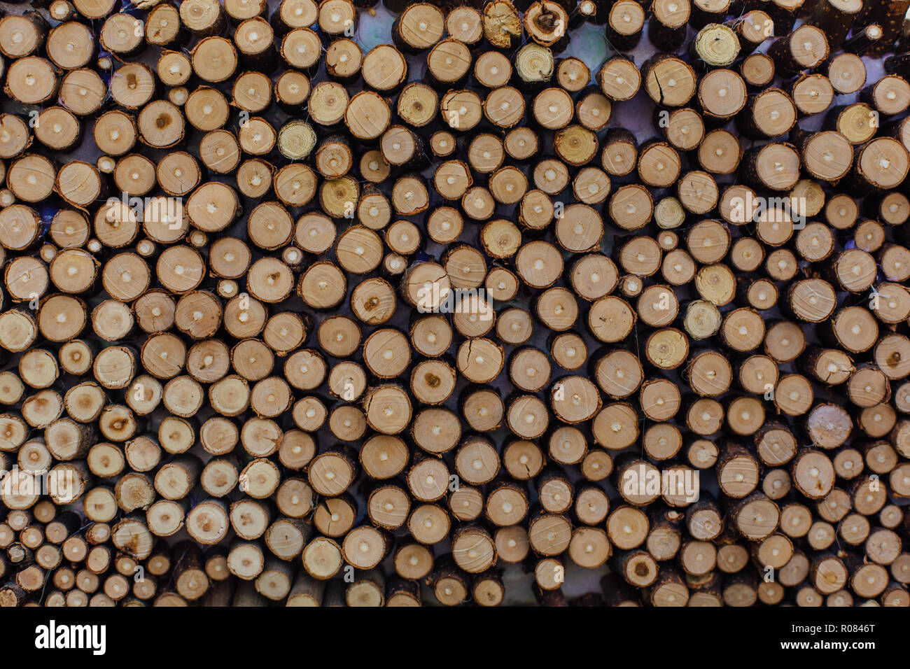 Wooden Stumps Close Up Small Pine Wooden Circles Pattern Wooden