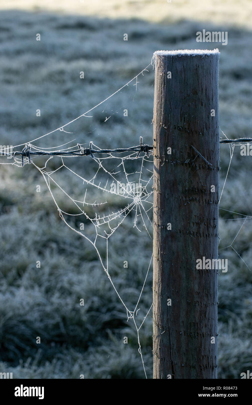 Fence post with frosty cobweb - Stock Image