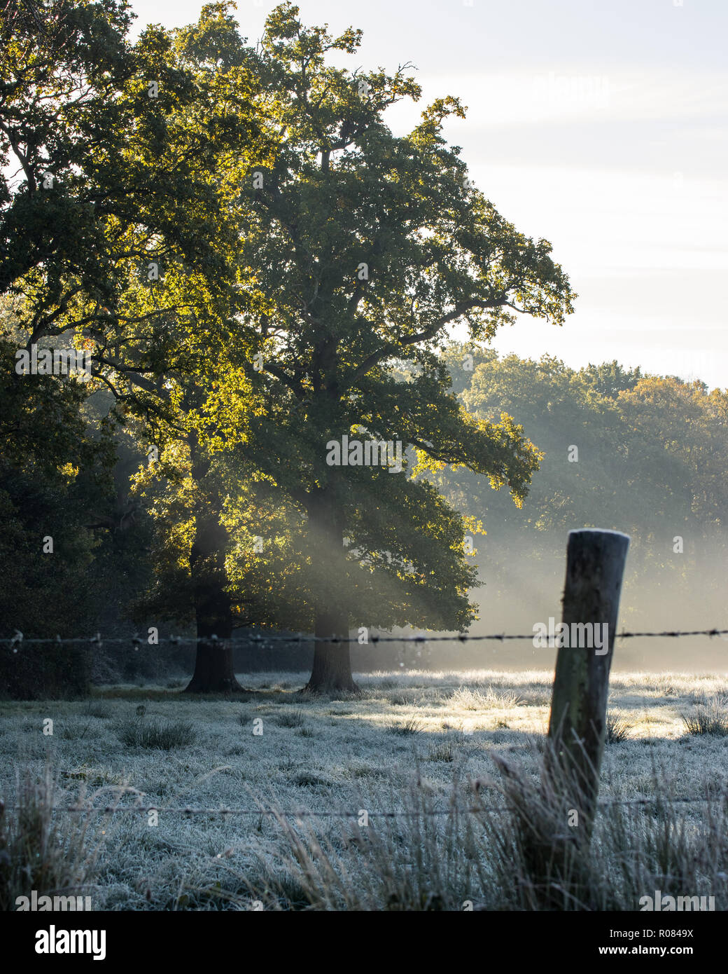 Sun rays shining through tree onto frosted meadow in winter - Stock Image
