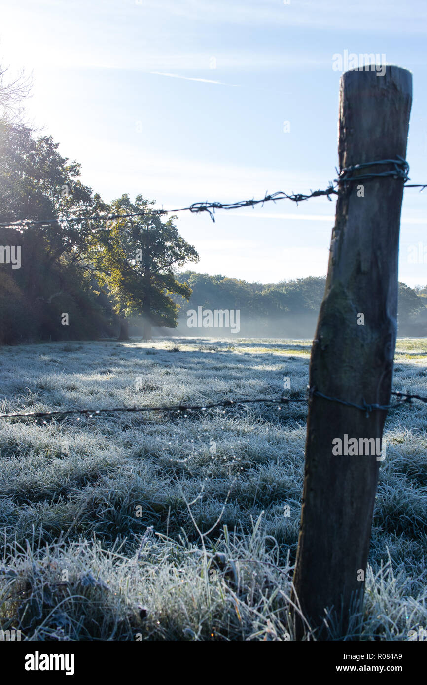 Cob web in the frost on fence post, Southwick, Hampshire, UK - Stock Image