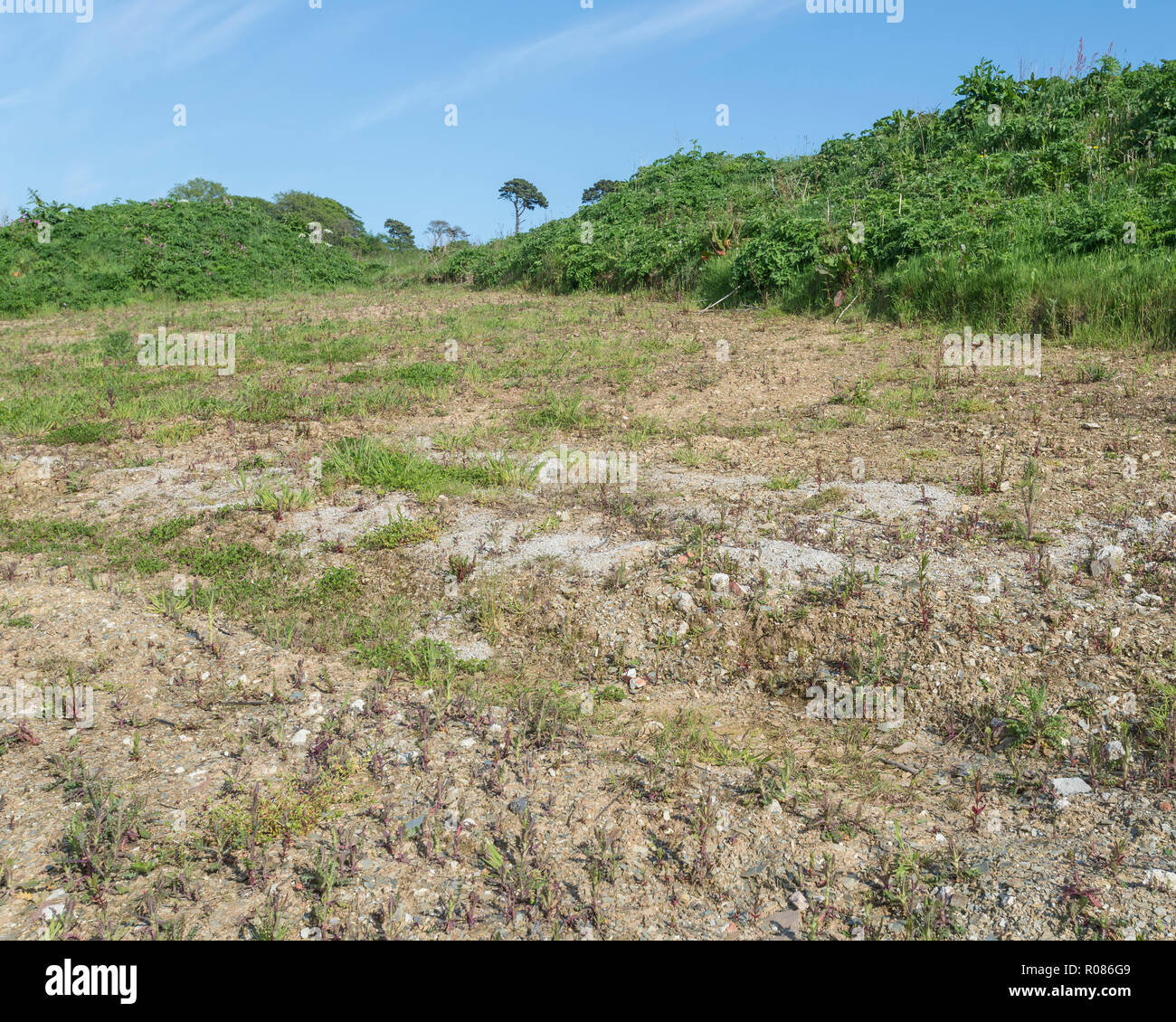 Parched earth in field during heatwave. - Stock Image