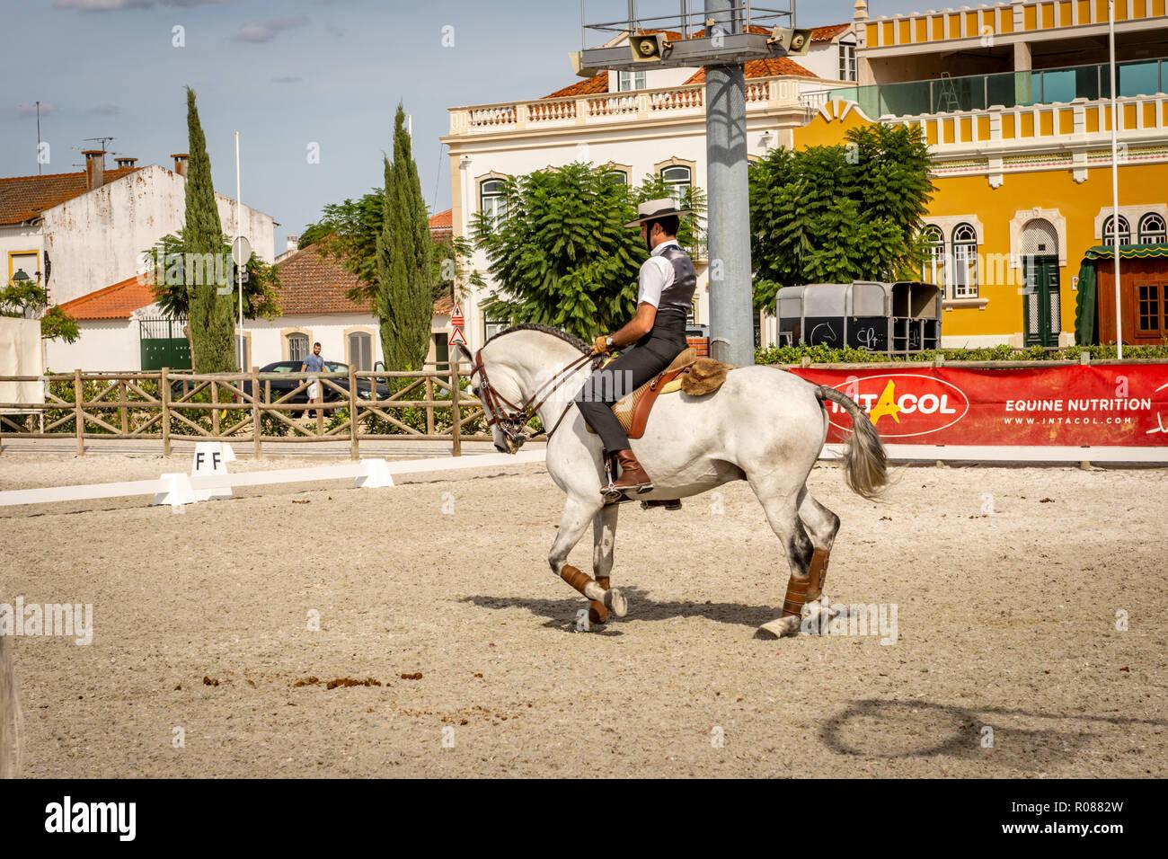 Lusitano Horse in Golega, Portugal - Stock Image