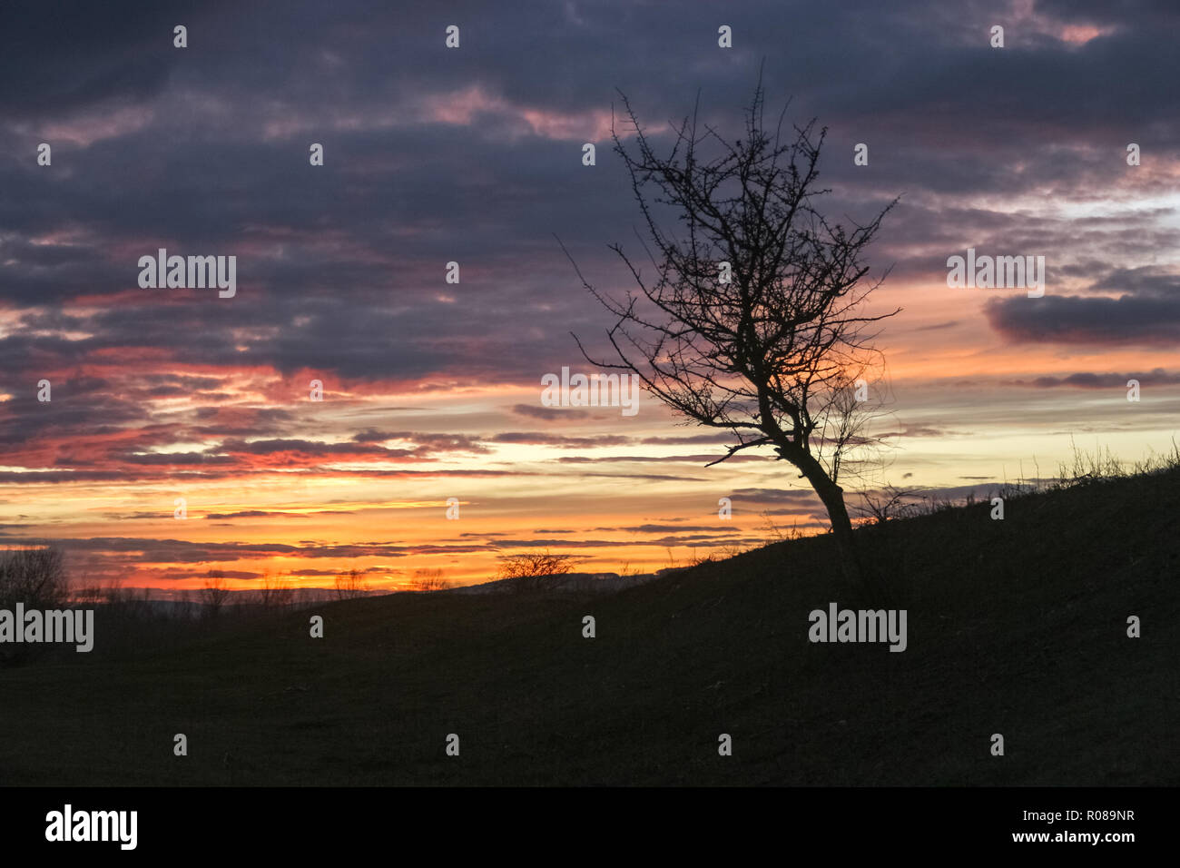 Silhouette of a lone tree against a colorful sky at sunset - Stock Image