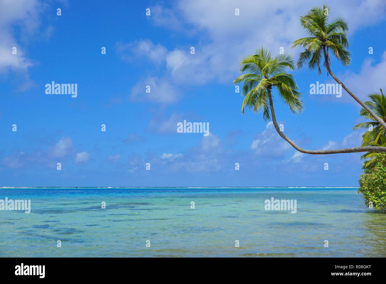 Tropical seascape two coconut palm trees lean over a lagoon with cloudy blue sky and sea horizon, French Polynesia, Huahine, south Pacific ocean - Stock Image