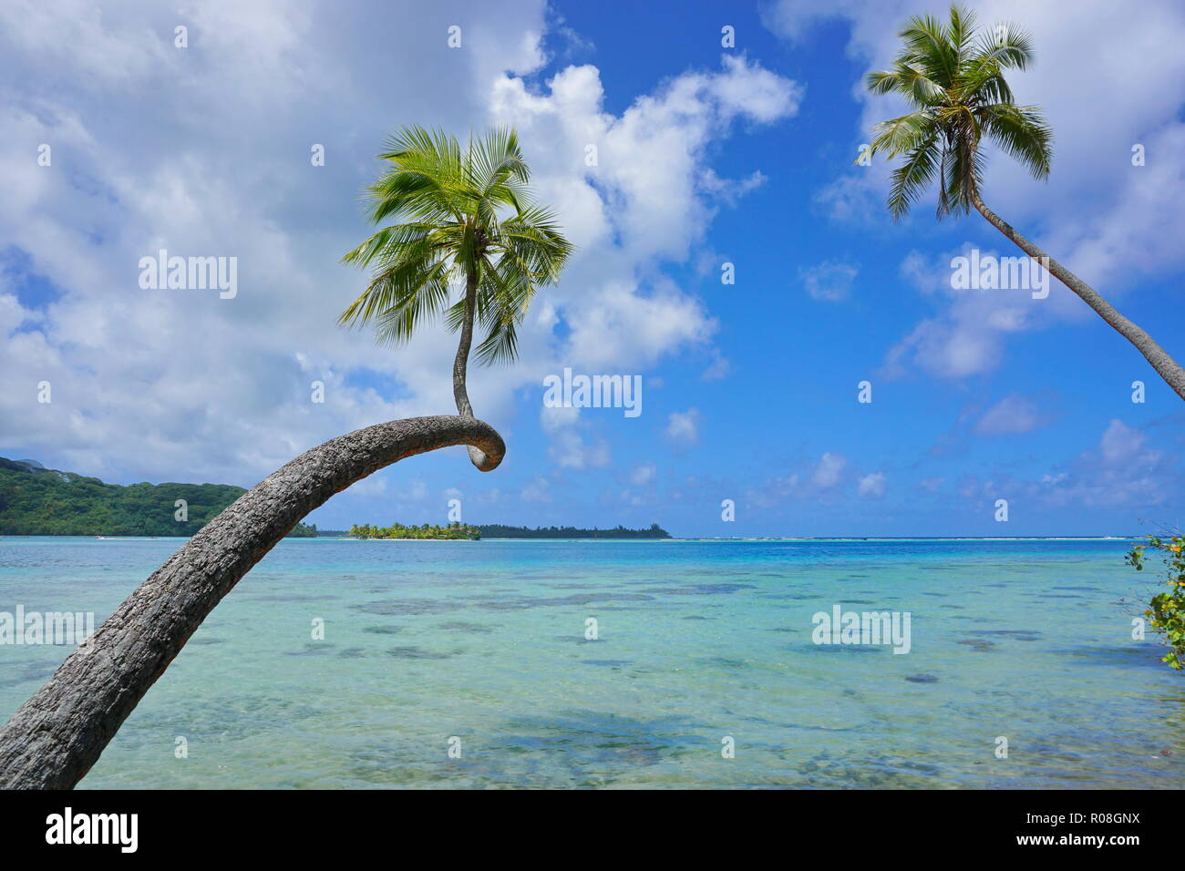 Tropical seascape two coconut palm trees lean over clear water with cloudy blue sky, French Polynesia, Huahine, south Pacific ocean - Stock Image