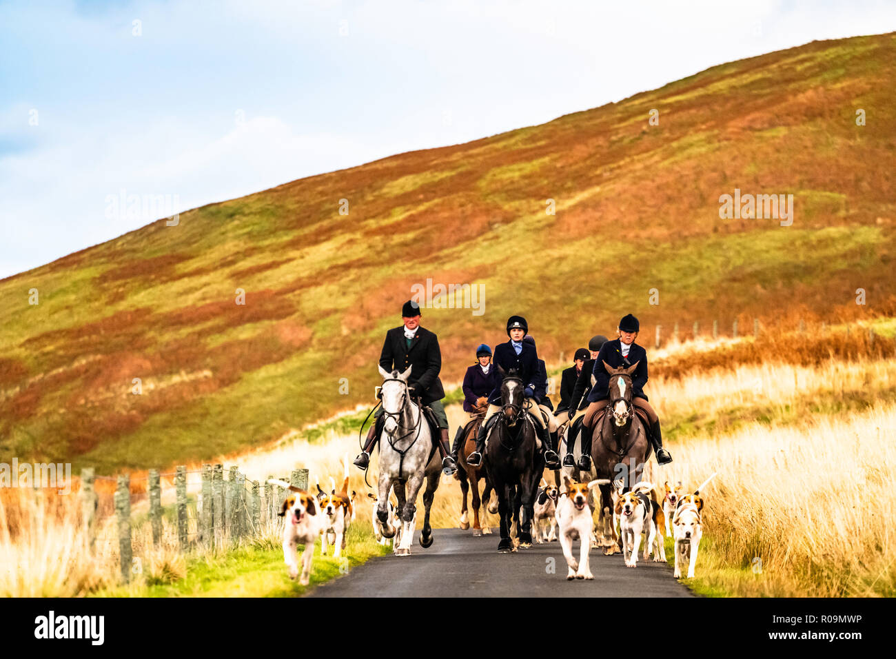Hownam, Kelso, Scottish Borders, UK. 3rd November 2018. The Border Hunt, a hill farmers pack, trot home after an efficient and productive day of fox control during their season Opening Meet near Hownam village. The fell hounds are a fundamental element of conservation in the area due to their ability to search large bracken beds on steep hillsides. Credit: Chris Strickland / Alamy Live News - Stock Image