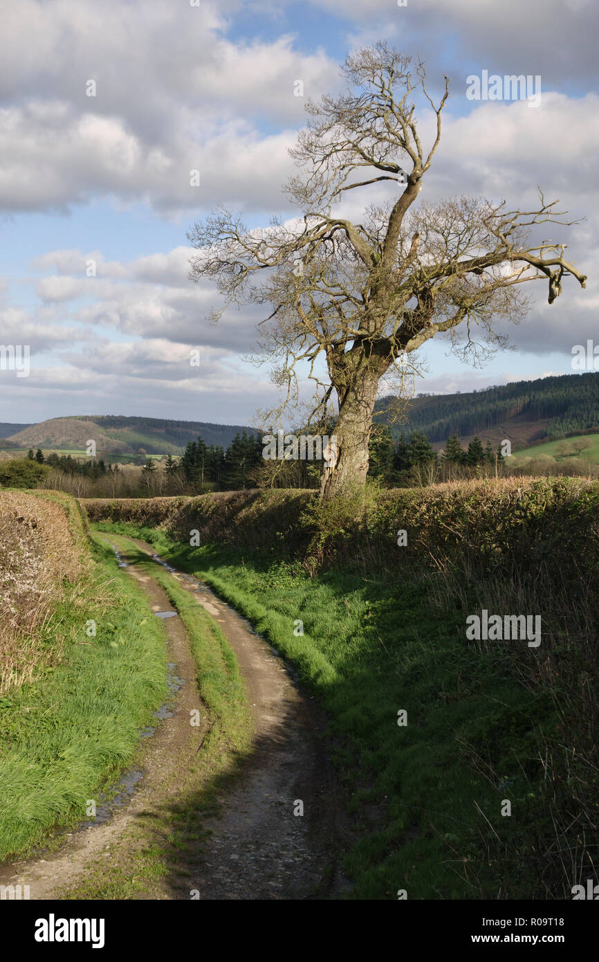 Countryside near Lingen, Leominster, Herefordshire, UK. An old farm track on a fine day in early spring at the start of a walk - Stock Image