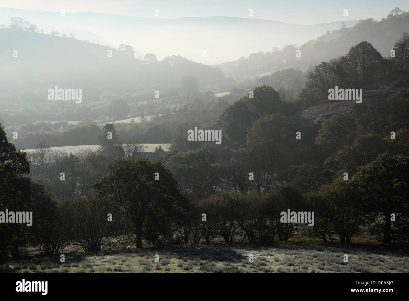 Country cottage in a misty Welsh valley wooded landscape in October autumn  Carmarthenshire, Wales UK  KATHY DEWITT - Stock Image