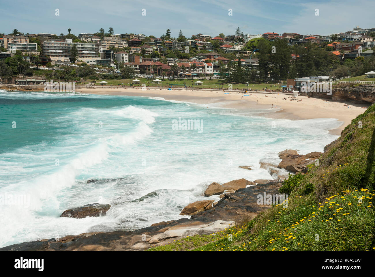 View along the foreshore of Bronte Beach, Sydney, Australia, with spring flowers in the foreground and turquoise sea and golden sandy beach behind. - Stock Image