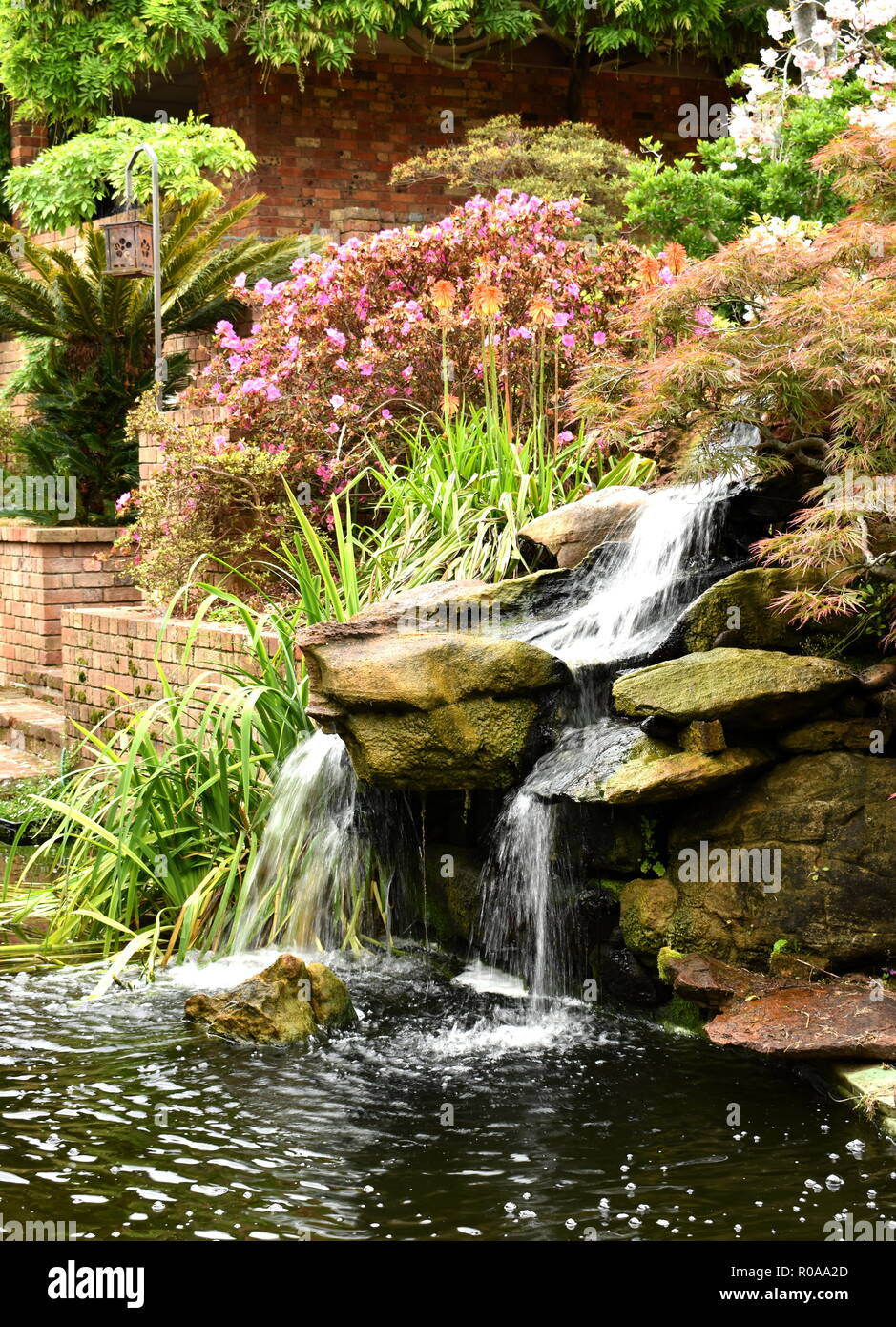A constructed waterfall in a Japanese style garden, falling into a koi pool - Stock Image