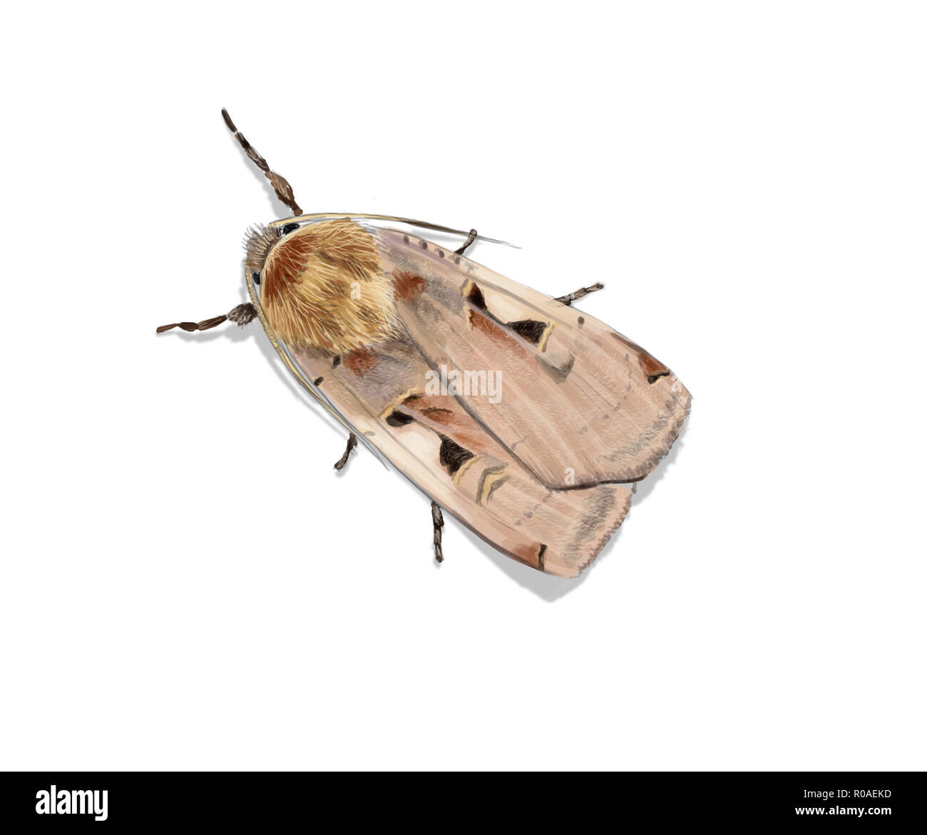 Digital illustration of the moth Setaceous Hebrew character - Stock Image