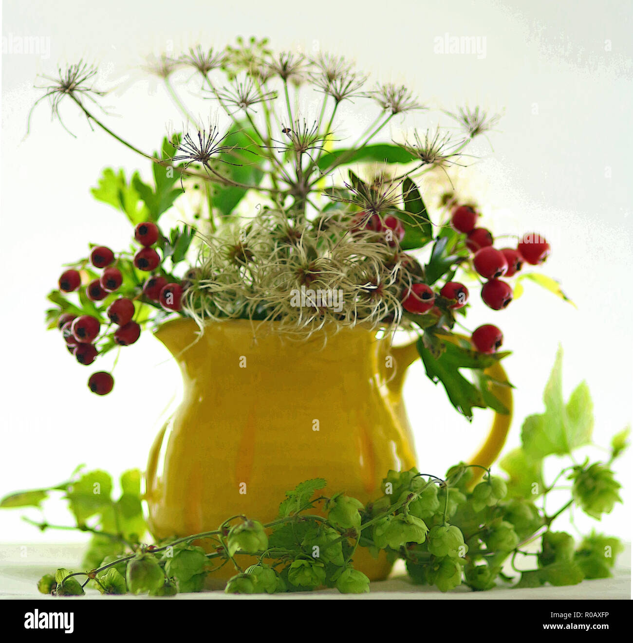 Hops and berries in a yellow jug - Stock Image