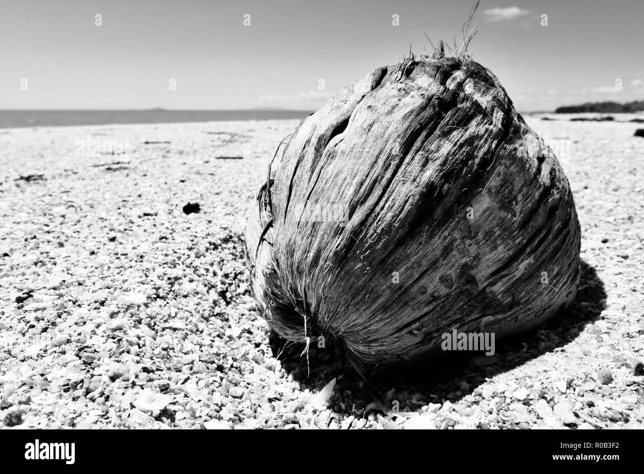 A coconut on a deserted tropical beach, Balgal beach, QLD, Australia - Stock Image