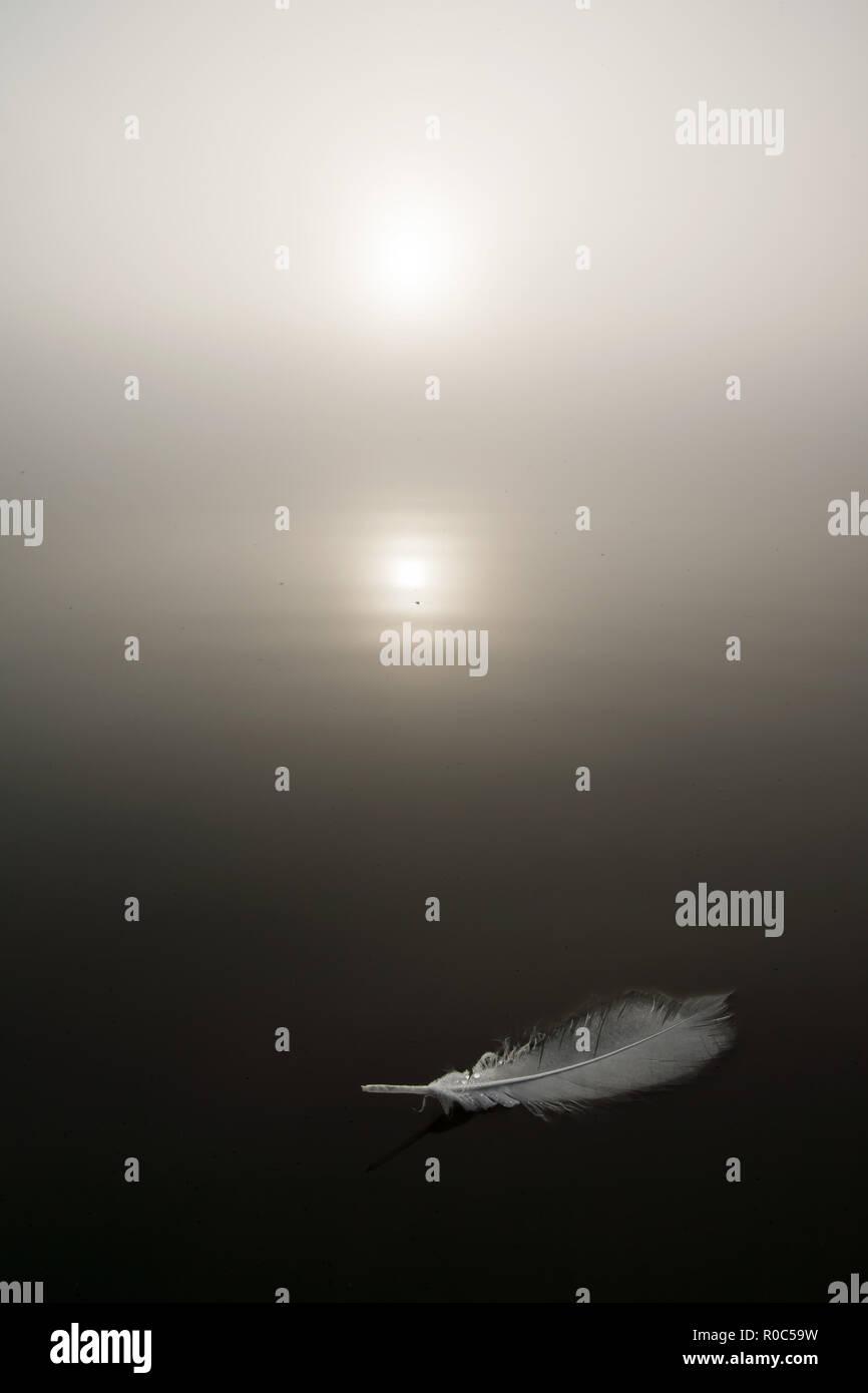Foggy sunrise over the lake - Stock Image