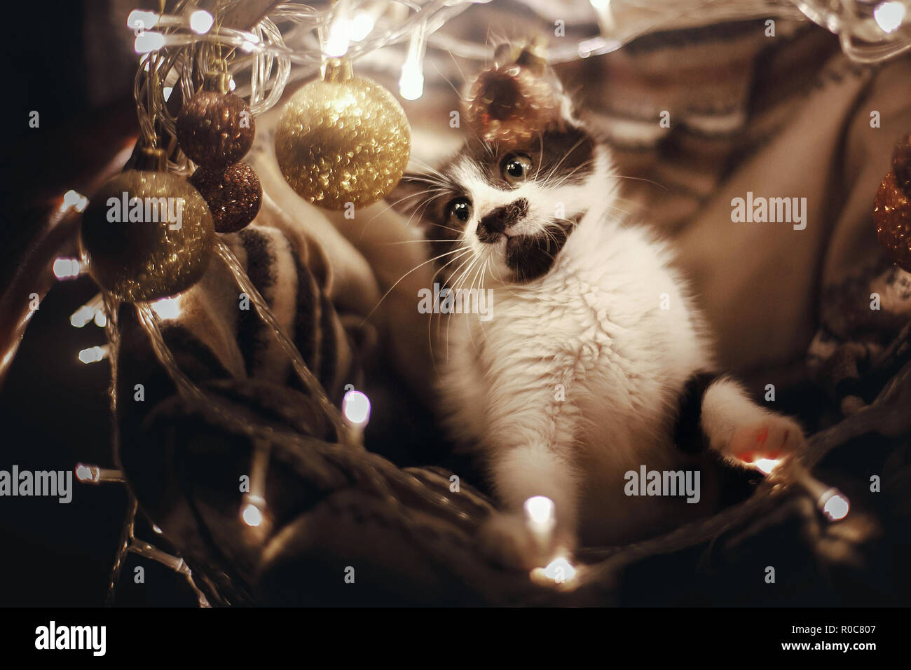Cute kitty playing with ornaments in basket with lights under christmas tree in festive room. Adorable funny kitten with amazing eyes. Merry Christmas Stock Photo