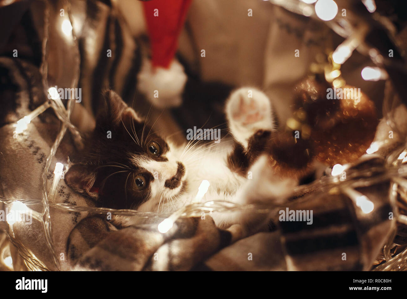 Cute kitty playing with ornaments in basket with lights under christmas tree in festive room. Adorable funny kitten with amazing eyes. Merry Christmas - Stock Image