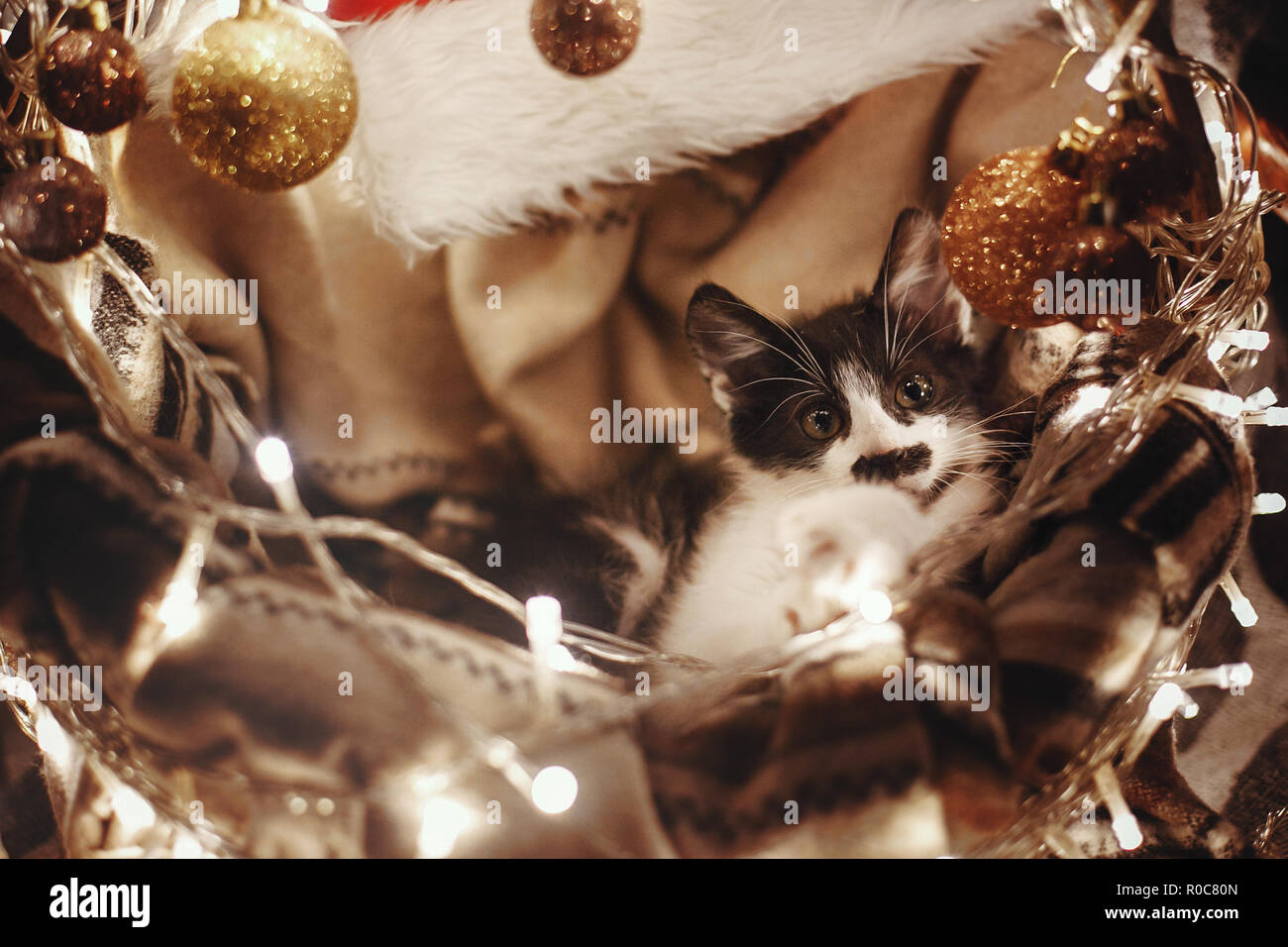 Cute kitty sitting in basket with garland lights under christmas tree in rustic room. Adorable funny kitten with amazing eyes. Merry Christmas concept - Stock Image