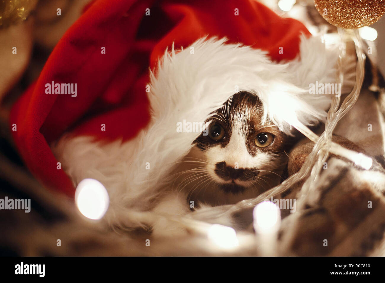 Cute kitty in santa hat sitting in basket with lights and ornaments under christmas tree in festive room. Merry Christmas concept. Adorable funny kitt - Stock Image