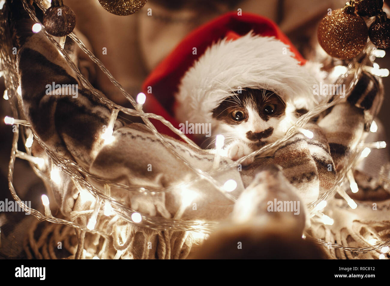 Cute kitty in santa hat sitting in basket with lights and ornaments under christmas tree in festive room, looking at dog friend. Merry Christmas conce - Stock Image