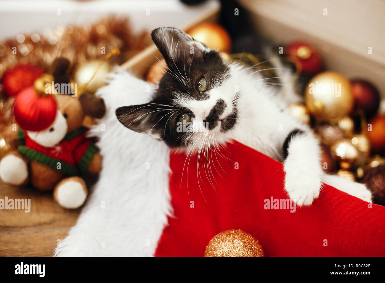 Cute kitty playing with red and gold baubles in box, ornaments and santa hat under christmas tree in festive room. Merry Christmas concept. Adorable f - Stock Image
