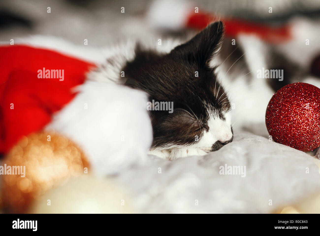 Cute kitty sleeping in santa hat on bed with gold and red christmas ornaments in festive room. Merry Christmas concept. Adorable funny kitten napping. - Stock Image