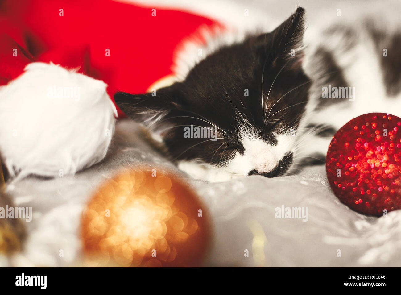 Cute kitty sleeping in santa hat on bed with gold and red christmas baubles in festive room. Merry Christmas concept. Adorable kitten napping. Atmosph - Stock Image