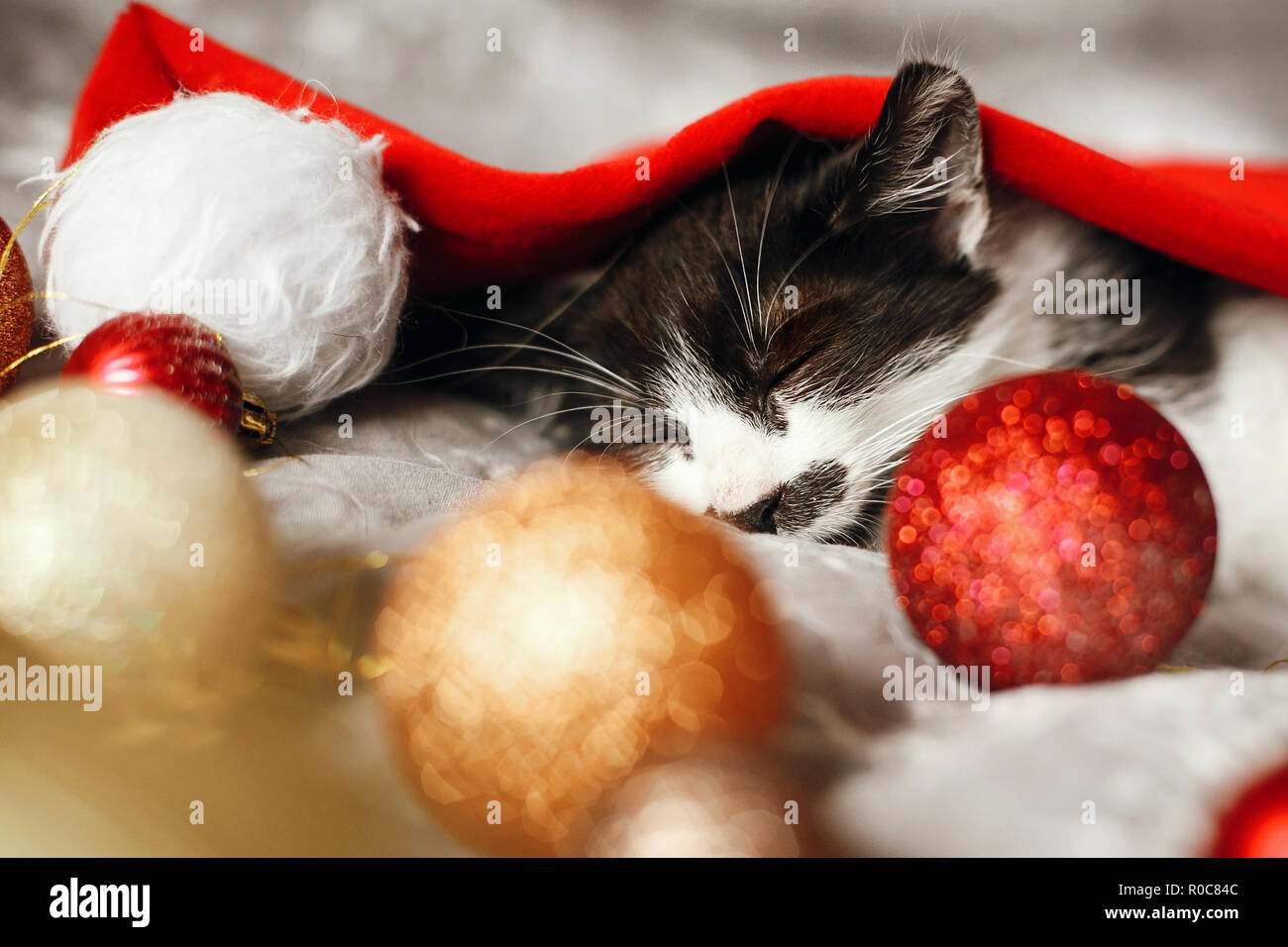 Merry Christmas concept. Cute kitty sleeping in santa hat on bed with gold and red christmas baubles in festive room. Atmospheric image. Season's gree - Stock Image
