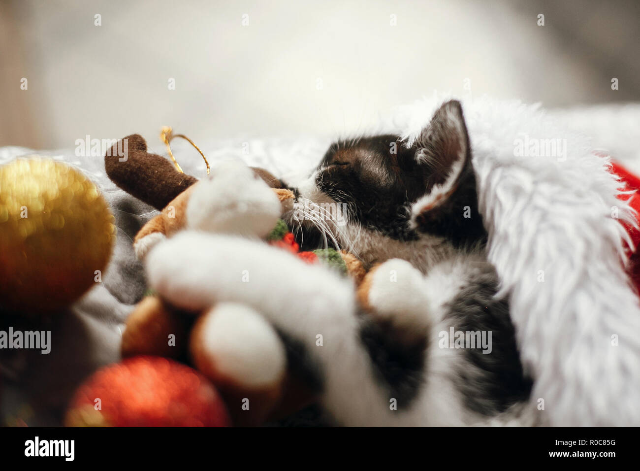 Cute kitty sleeping in santa hat on bed with gold and red christmas baubles in festive room. Merry Christmas concept. Adorable kitten napping with rei - Stock Image
