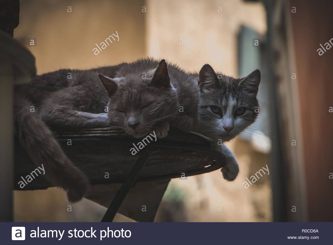 Two Cats in the french Village Nyons Provence domestic cats lazy looking at person cute domestic cat sleeping - Stock Image
