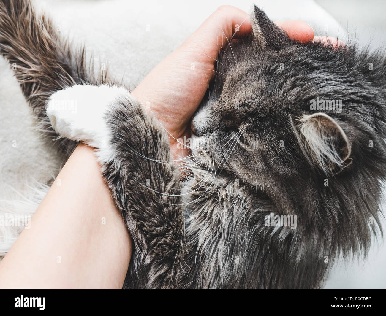 Charming fluffy kitten hugging a woman's hand on a white background. Top view, close-up. Pet care concept - Stock Image