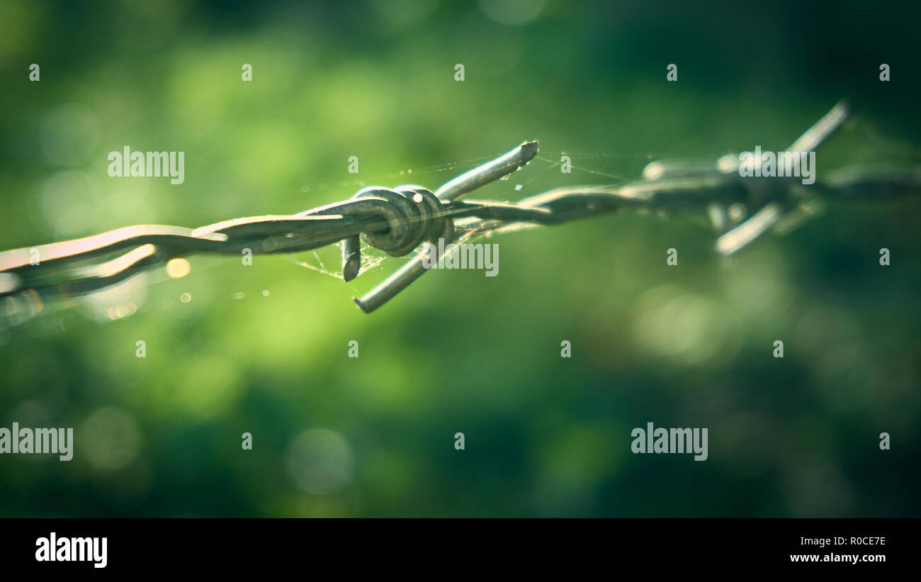 Close-up barbed wire, vintage tone. - Stock Image
