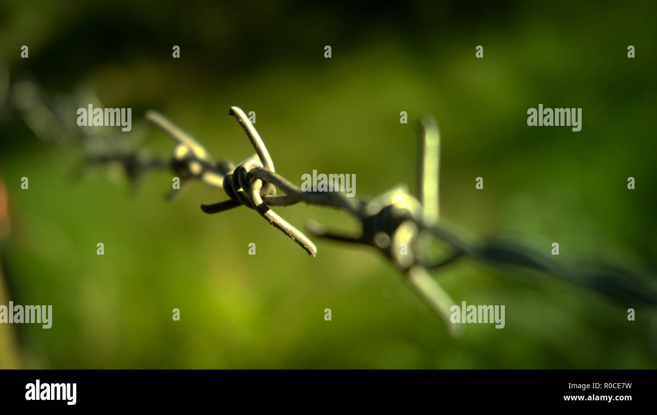 Close-up barbed wire - Stock Image
