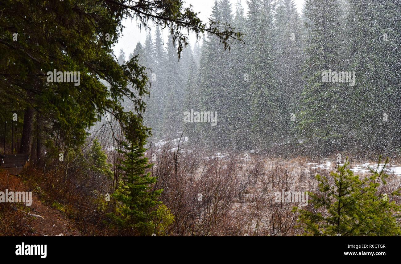 breath taking scenes in the Alberta wild - Stock Image
