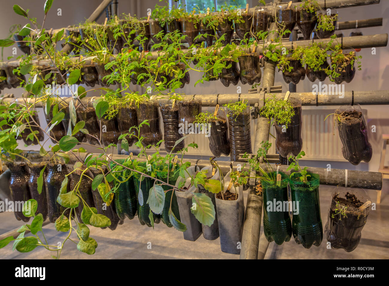 Organic Hanging baskets vegetable garden made of plastic bottles inside a home - Stock Image
