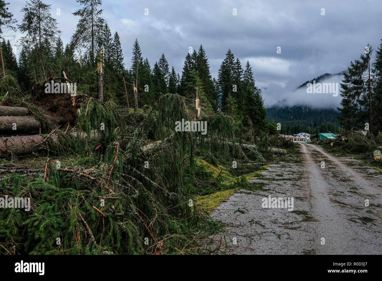 Belluno, Italy. 03th November, 2018. View of Val Visdende, in the foreground the trees cut down by the flood Belluno, Italy. © Stefano Mazzola / Awakening / Alamy Live News - Stock Image