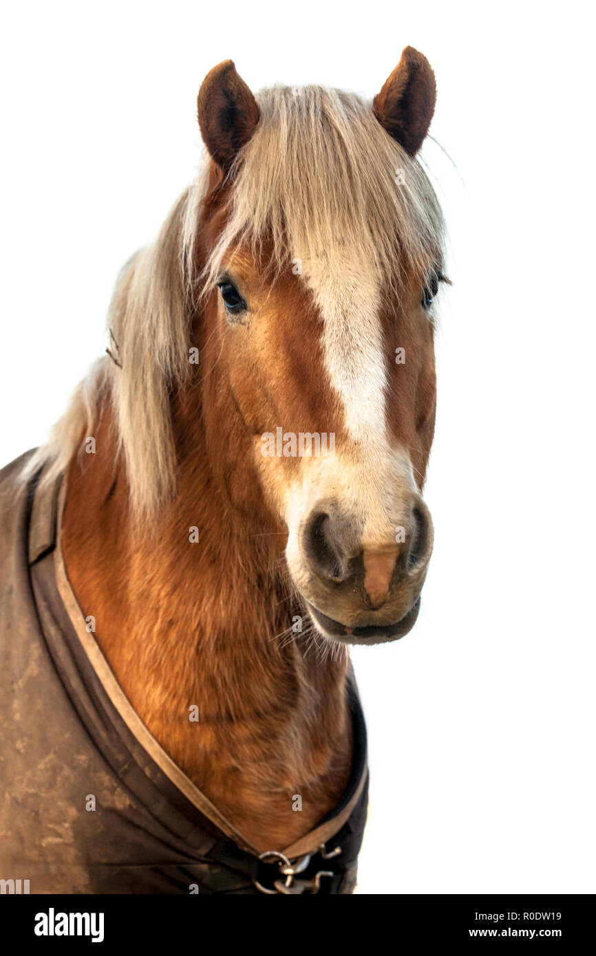 Head Of A Cute Horse With Clipping Path Horses Were Historically Used In Warfare From Which A Wide Variety Of Riding And Driving Techniques Develope Stock Photo Alamy