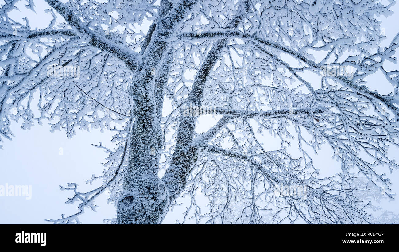 Winter Tree Branches Silhouette Closeup High Resolution Stock ...