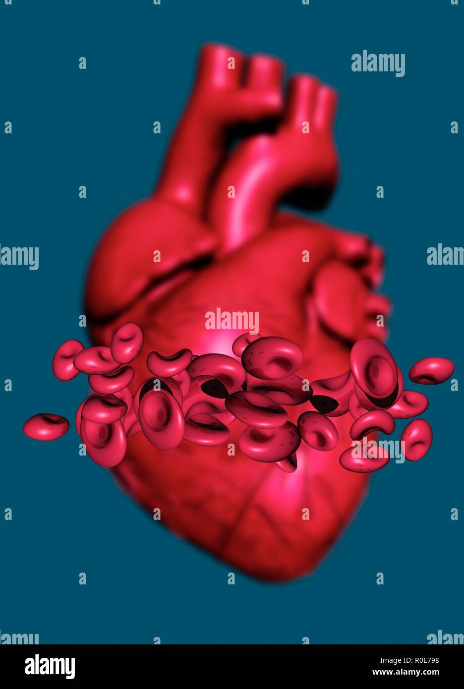 Human heart and red blood cells, illustration. - Stock Image
