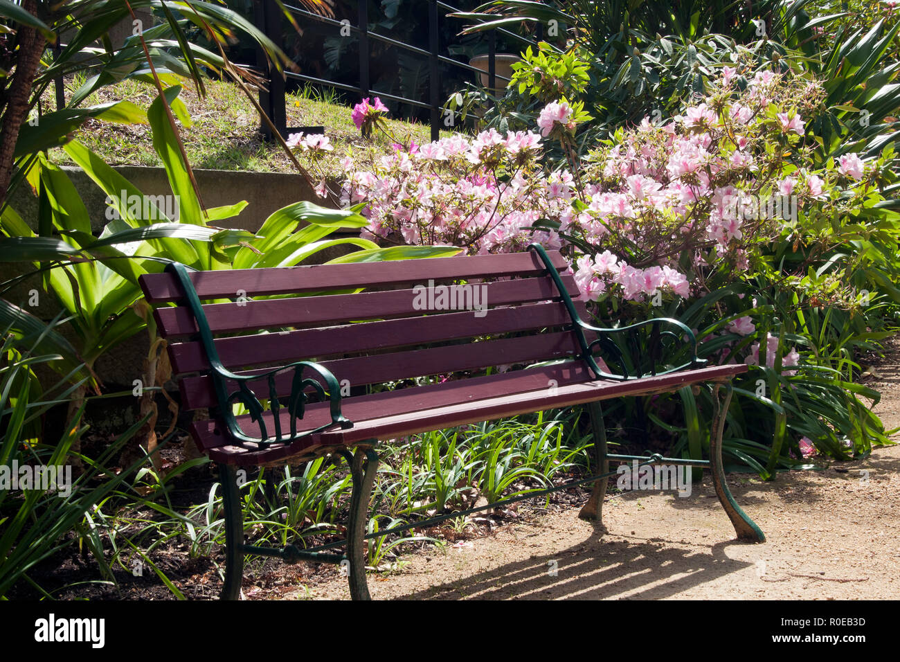 Admirable Sydney Australia Wooden Seat In Garden With Flowering Ibusinesslaw Wood Chair Design Ideas Ibusinesslaworg